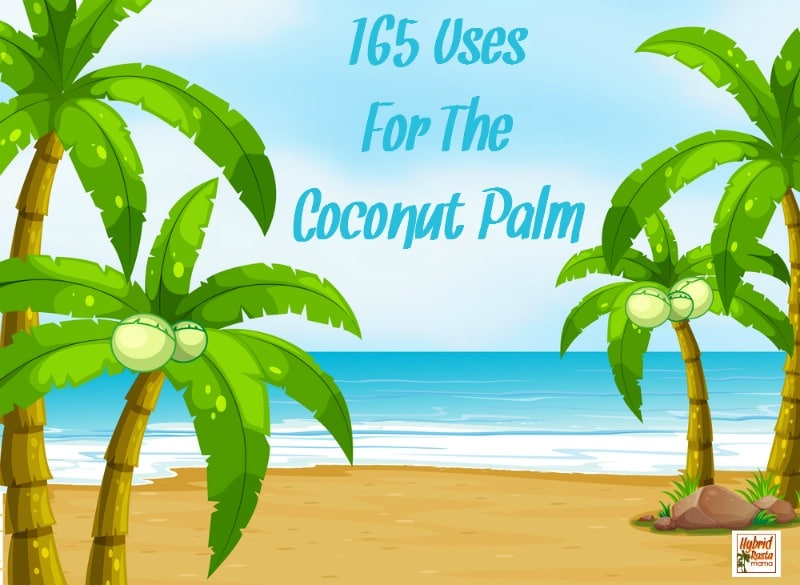 165 + Uses for the Coconut Palm – There's More To It Than Coconut Oil