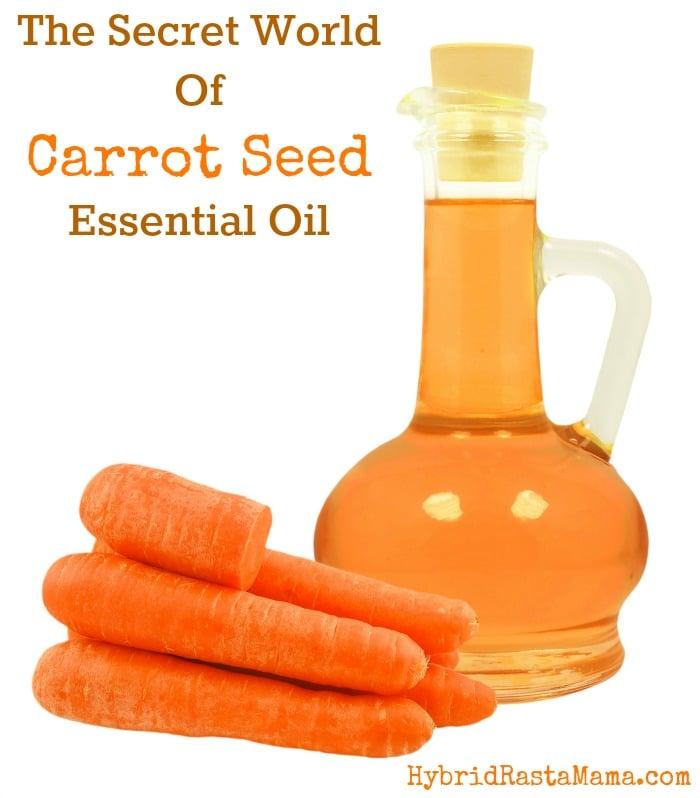The Secret World Of Carrot Seed Oil