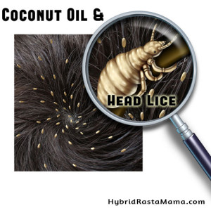 Coconut Oil and Head Lice: HybridRastaMama.com