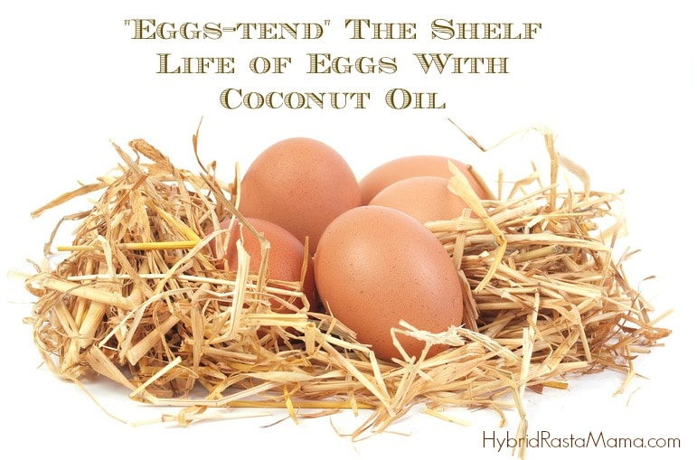 Wondering how to extend the shelf life of eggs? It is simple really and the secret to doing so might surprise you. Check out this post and get your egg on with HybridRastaMama.com.
