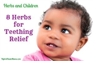 8 Herbs for Teething Relief: HybridRastaMama.com