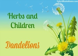 Herbs and Children – Dandelion: HybridRastaMama.com