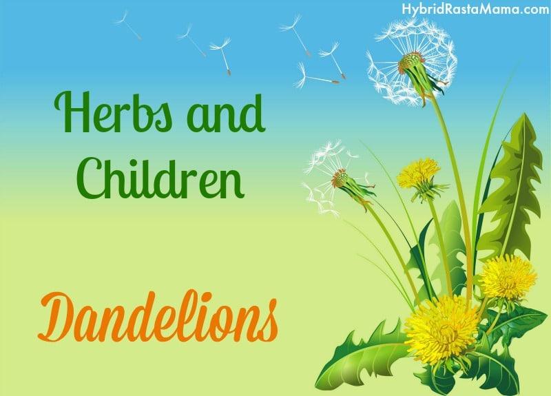 Herbs And Children Dandelions By Hybrid Rasta Mama