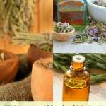 Herbs – A Gateway To Homeschooling