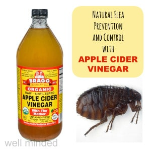 Natural Flea Prevention and Control with Apple Cider Vinegar