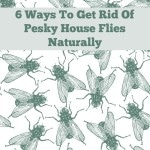 6 Ways To Get Rid Of Pesky House Flies Naturally