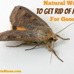 Natural Ways To Get Rid Of Moths For Good