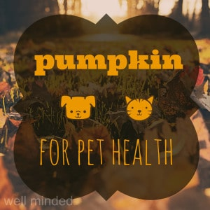 Pumpkin For Pet Health