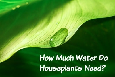 How Much Water Do My Houseplants Need?