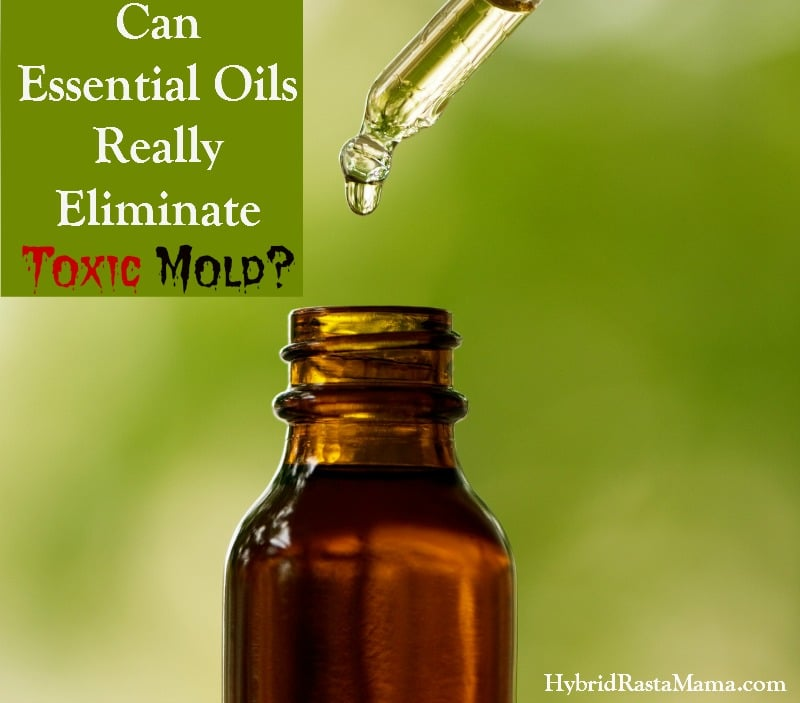Can Essential Oils Really Eliminate Toxic Mold?