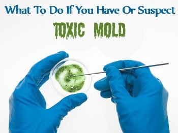 What To Do If You Have Toxic Mold