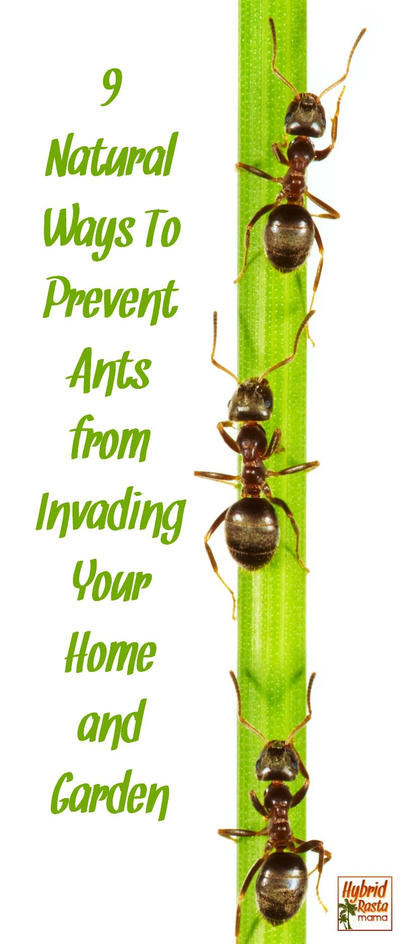 Natural Ways To Deter Mosquitoes