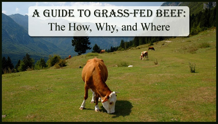 A Guide To Grass Fed Beef – The How, Why, & Where