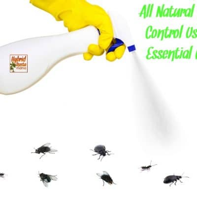 All Natural Pest Control Using Essential Oils