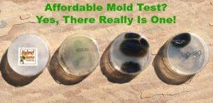 Affordable Mold Test? Yes, There Really Is One! from HybridRastaMama.com