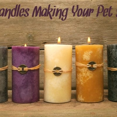 Are Candles Making Your Pet Sick?