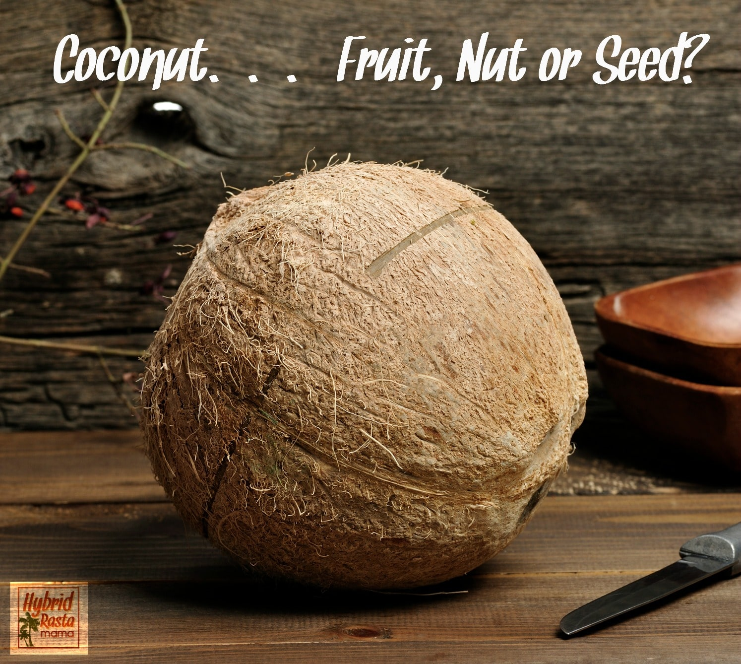 The Coconut – Fruit, Nut, or Seed?