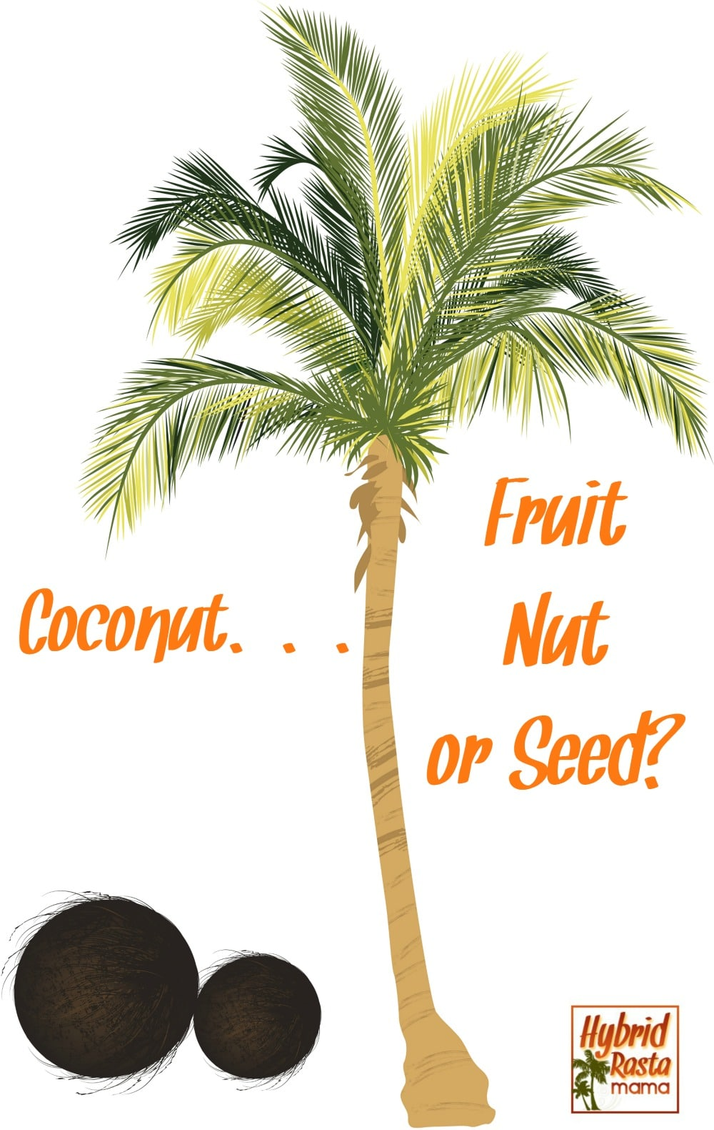 It's a fruit! It's a nut! It's a seed! It's a Coconut? Well, what is it? Let's explore some coconut botany and get to the bottom of this mystery with HybridRastaMama.com.