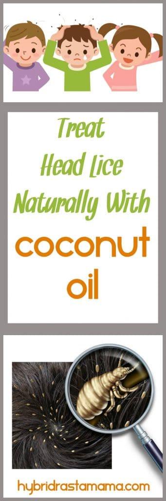 Coconut Oil And Head Lice By Hybrid Rasta Mama