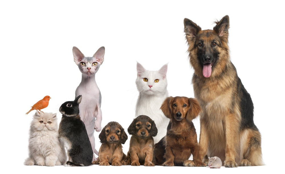 Group of pets: dog, cat, bird, rabbit - Has your pet been exposed to toxic mold? Learn how to safely and naturally remove mold spores from animal fur as well as how to prevent cross contamination. From HybridRastaMama.com