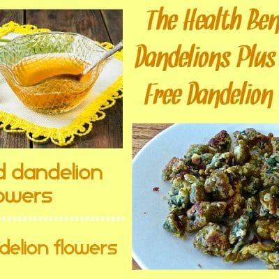 Fried Dandelions + Candied Dandelions (Gluten Free Recipes)