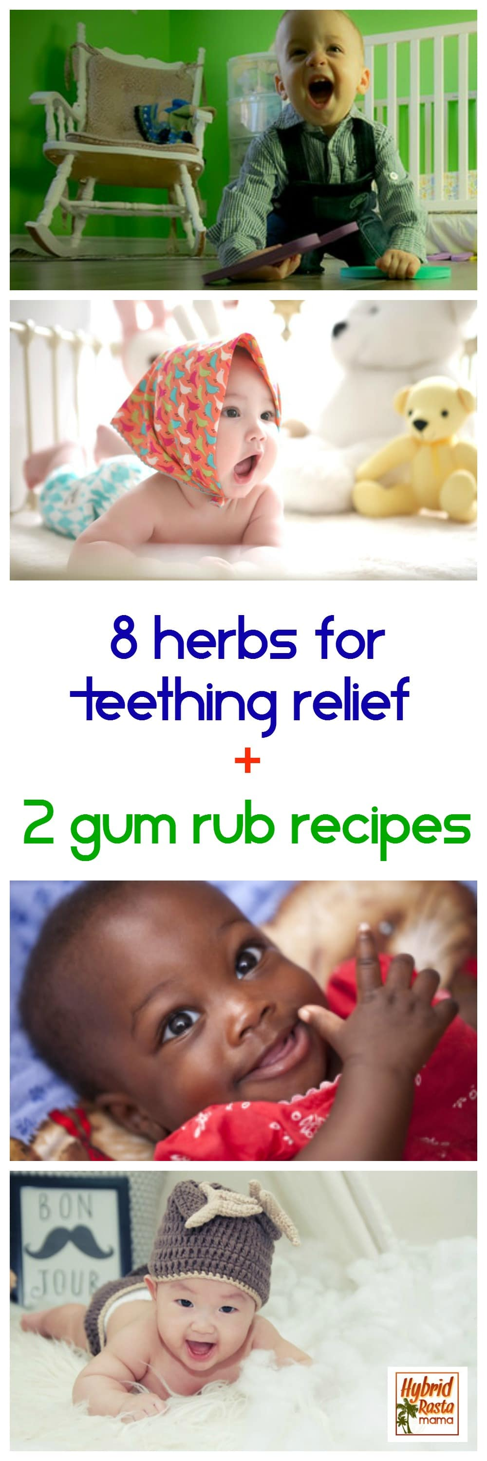 Teething is one of the roughest things babies and toddlers go through. Good thing they can get teething relief with herbs and these magical gum rub recipes. From HybridRastaMama.com