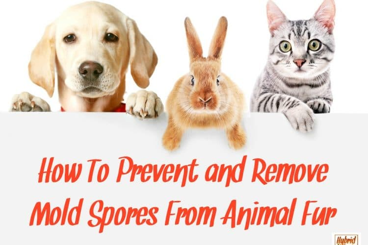 How To Remove Mold Spores From Animal Fur