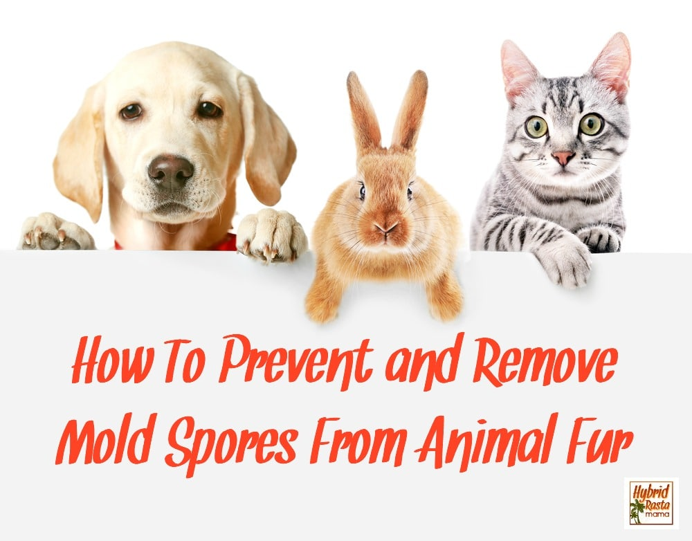 Cute friendly pets on white background - Has your pet been exposed to toxic mold? Learn how to safely and naturally remove mold spores from animal fur as well as how to prevent cross contamination. From HybridRastaMama.com