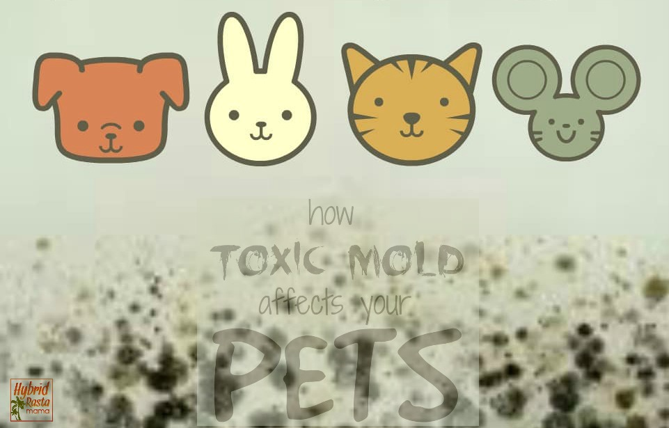 Toxic mold doesn't just hurt humans, it harms household animals as well. Learn more about how toxic mold affects pets and what you should do if your fur baby has been exposed. From HybridRastaMama.com