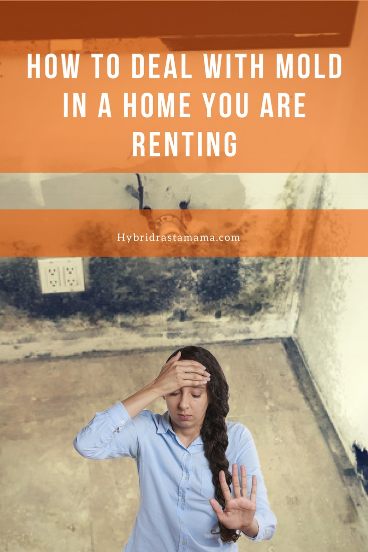 What to do if you have mold in a home you are renting. A look at both the landlord and tenant's responsibilities and how to avoid disputes over mold.  From HybridRastaMama.com #mold #toxicmold #blackmold #moldremediation #landlordtenant #rentals #tenantrights