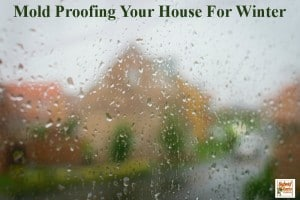 Mold Proofing Your House For Winter by HybridRastaMama.com