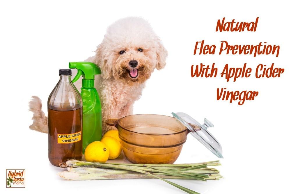 Fleas Cats Apple Cider Vinegar