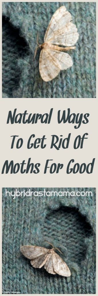 Getting rid of moths naturally can be a bit of a challenge. Moths are clever. Learn my secrets to getting rid of all kinds of moths for good sans chemicals. From HybridRastaMama.com