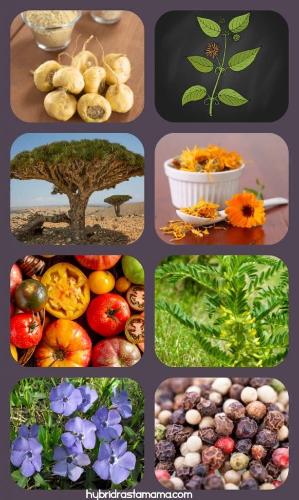 Collage with images of Phytozon ingredients