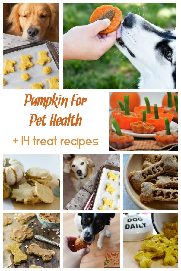 A collage of pet treat images. These treats feature pumpkin.