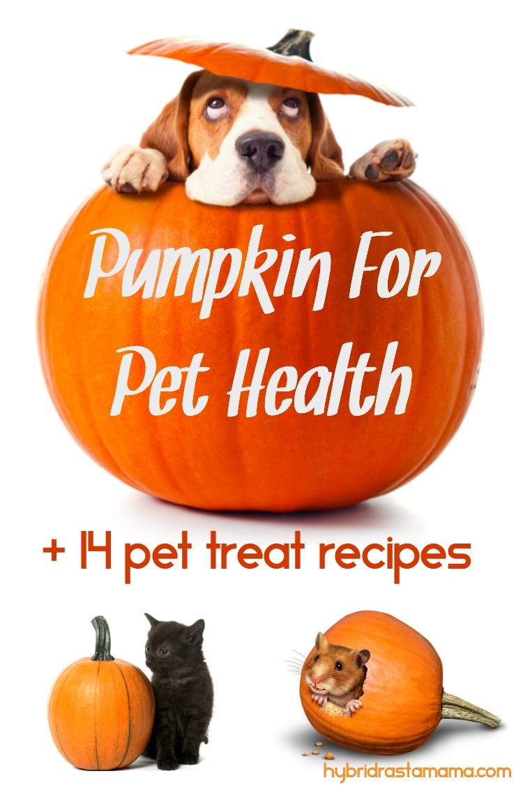 A beagle's head popping out of a pumpkin top. A black kitten sitting next to a small pumpkin. A hamster with it's head poking out of the side of a carved pumpkin. Pumpkin for pet health + 14 treat recipes is written on the beagle's pumpkin.