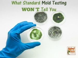 What Standard Mold Testing WON'T Tell You from HybridRastaMama.com