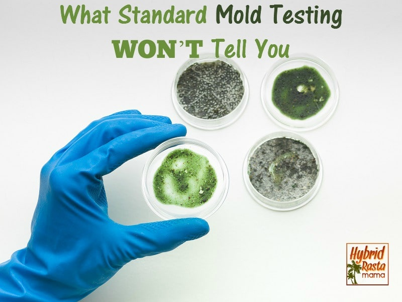 4 mold test petri dishes with cultures on them.