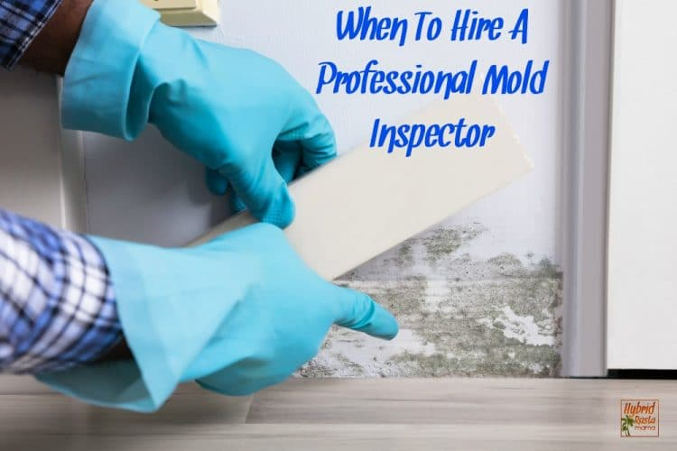 When To Hire A Professional Mold Inspector