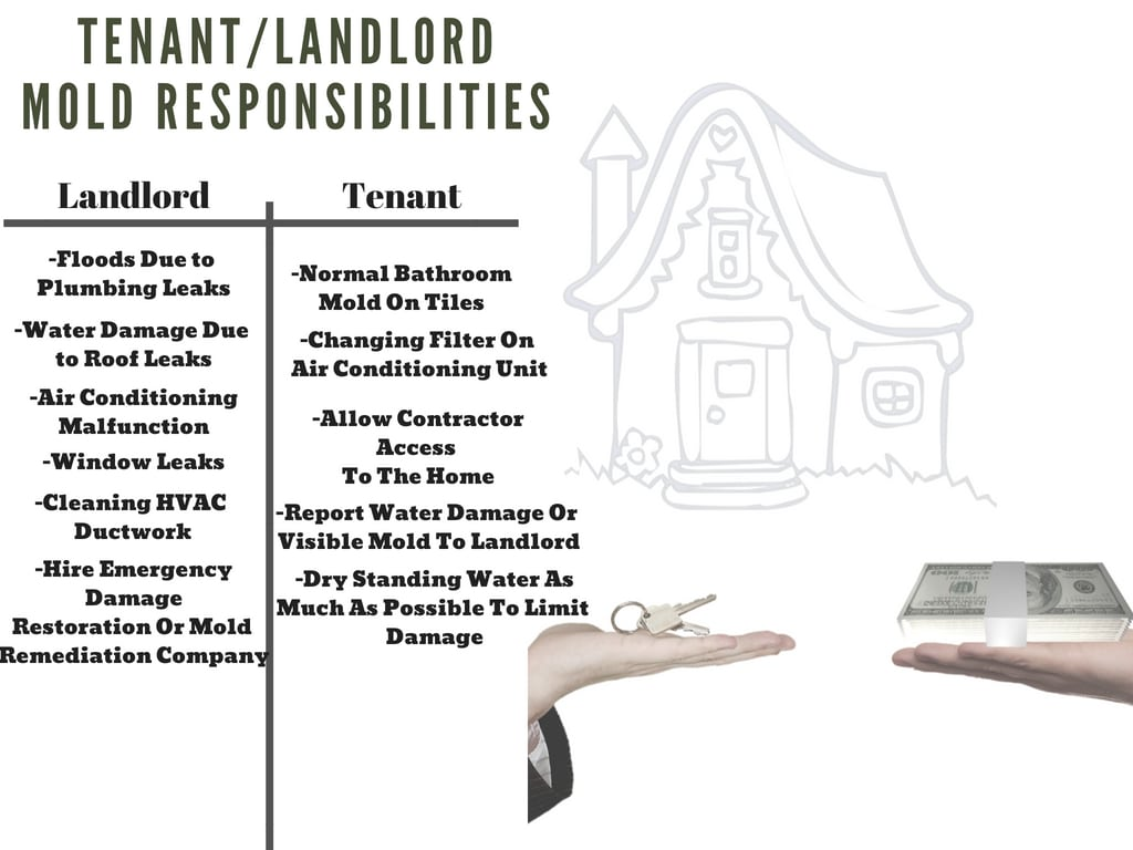 Tenant and landlord responsibilities if there is  mold in a home you are renting